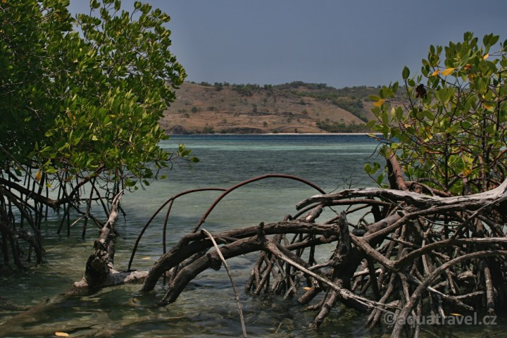 Seraya mangrovy