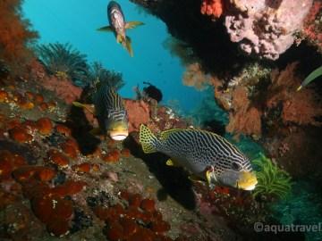 Vrak Liberty a chrochtalové. Potápění na Bali v Tulambenu