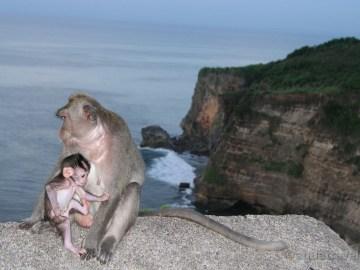 Bali výlety Uluwatu makakové na útesech nad mořem