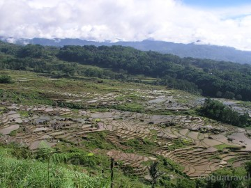 Batutumonga - rýžová políčka kraje Toraja na Sulawesi
