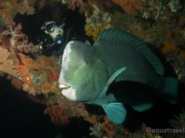 Noční potápění na Bali v Tulambenu nemůžete vynechat