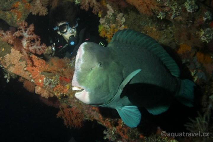 Noční potápění na Bali v Tulambenu