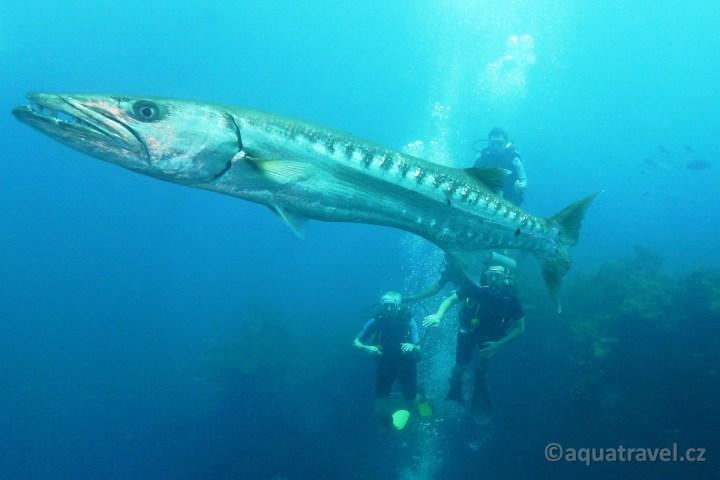 Kurz potápění na Bali v Tulambenu