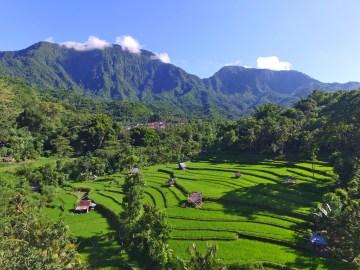 Rýžová políčka v údolí Bangle