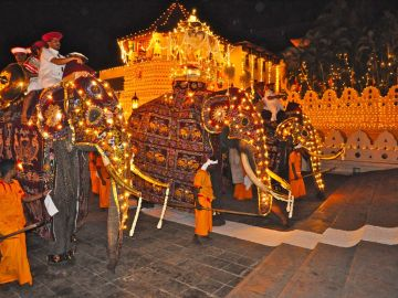 Sloni v Kandy při ceremonii Perhara