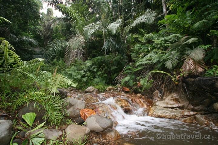 Džungle na Floresu