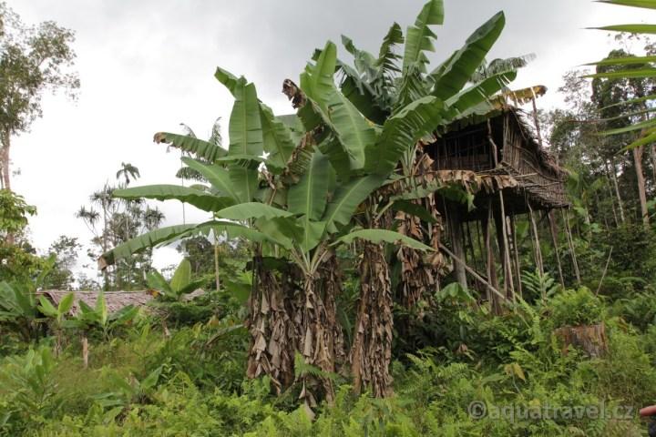 Korowai stromový dům