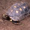 30年以上前に行方不明になった亀が鍵のかかった物置から生還