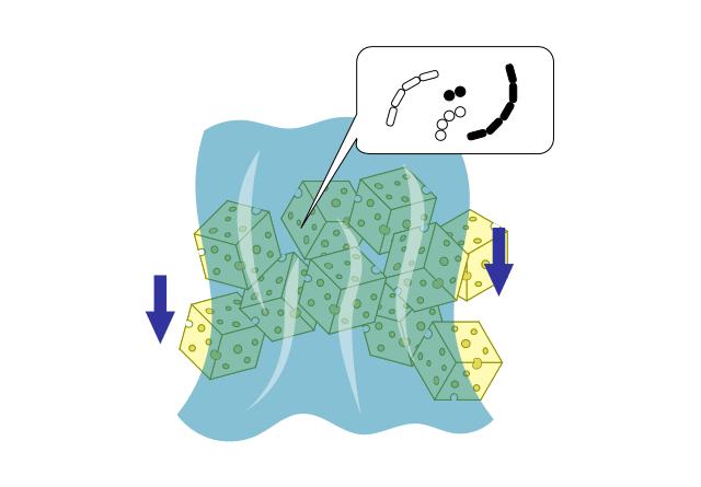 バクテリアによる生物濾過の模式図