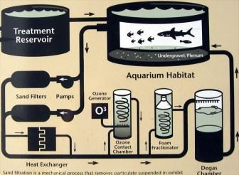 物理ろ過/化学ろ過/生物ろ過の効果まとめ!アクアリウム・亀飼育の基礎