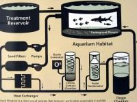 水槽維持の基本!濾過の種類と原理のまとめ!亀にも効果あり