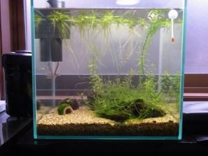 水草&生体ストック!30cmストック水槽のタンクデータ