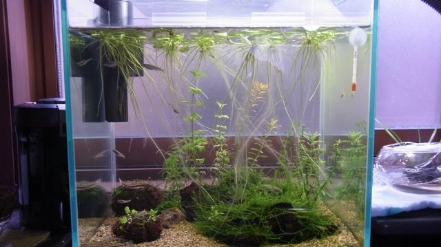 水草の肥料として炭酸カリウムを水槽に添加