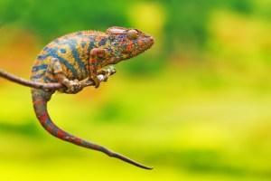 愛好家必読!!爬虫類のおよそ5分の1が絶滅の危機に…