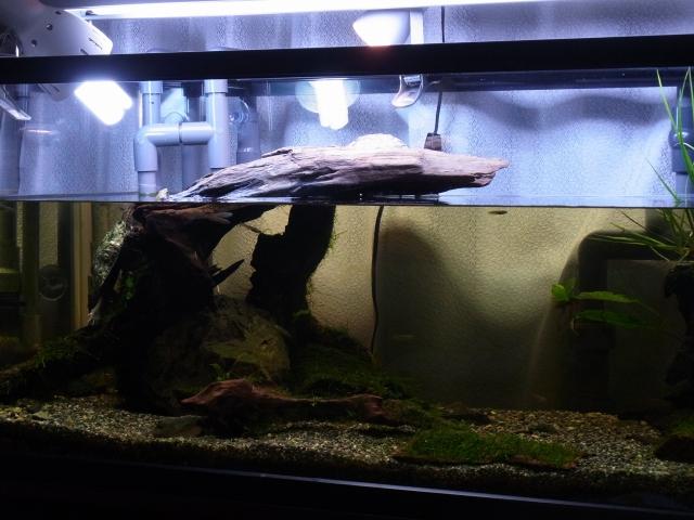 流木のあくによって水が茶色くなったカメ水槽