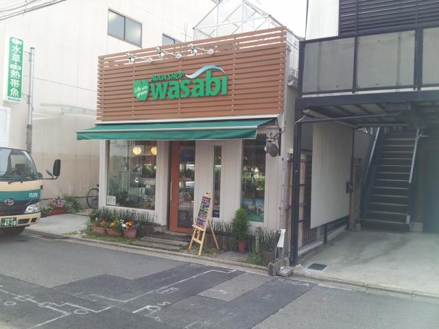 AQUA SHOP wasabi