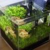 色んな変化があった…20cmキューブ小型水草水槽4ヶ月の変遷