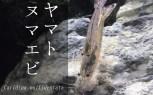ヤマトヌマエビ | AquaTurtlium