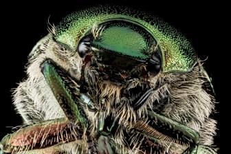 生き物ブロガーとしてジャポニカ学習帳昆虫写真騒動に思うこと
