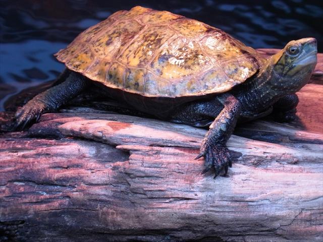 亀などの爬虫類に寒い冬でも太陽光の紫外線を浴びさせる工夫