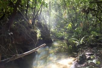 ミミナシオオトカゲと体感型動物園「iZoo」での繁殖成功の快挙