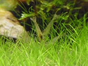 20cmキューブ水槽の水草と生体の画像まとめ 2014年12月