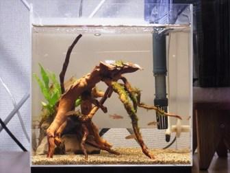 ブラックウォーターの効果・作り方-熱帯魚水槽の水質調整法