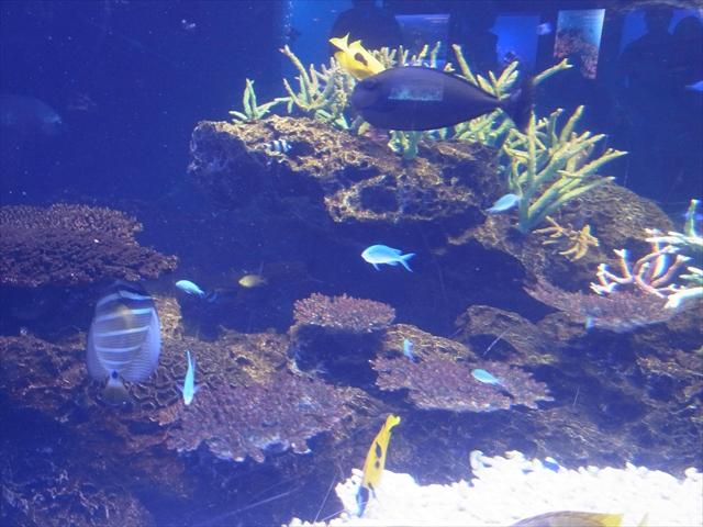 さんごの海のサンゴ礁