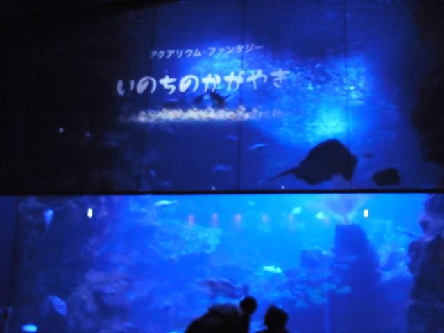京都水族館 アクアリウム・ファンタジー~いのちのかがやき~ 1