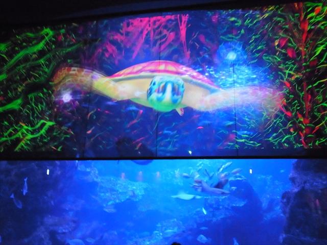 京都水族館 アクアリウム・ファンタジー~いのちのかがやき~ 3