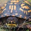 ペットに人気の水棲亀・リクガメの種類20選&飼育できない亀