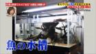 流木を紹介する所さんの番組に写真提供しました(テレビ東京)