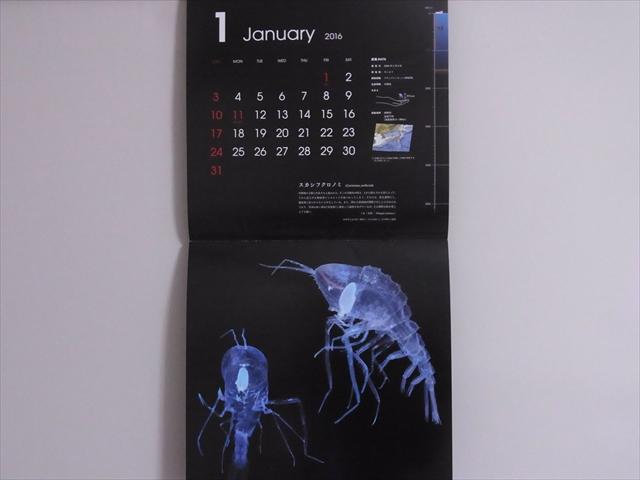 深海生物図鑑カレンダーを飾ってみた