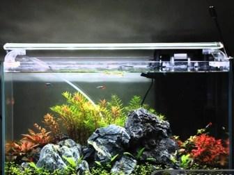 アクアリウム水槽用ライト・照明(蛍光灯・メタハラ・LED)の選び方とおすすめ!熱帯魚・水草への効果も解説