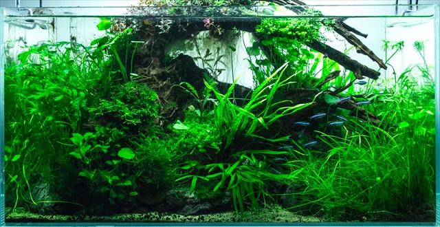 水草が密生した水槽レイアウト
