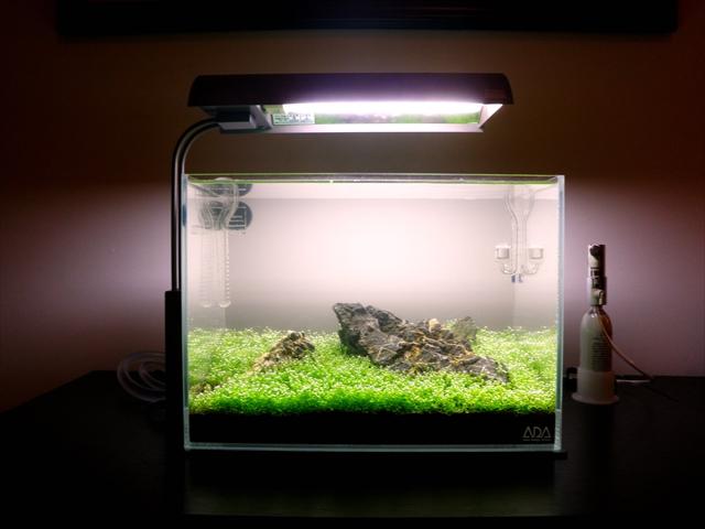 CO2を添加したアクアリウム水槽