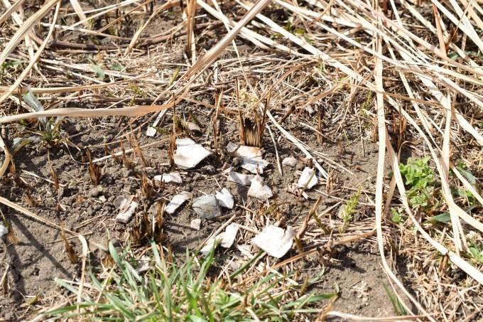 バラバラになった亀の甲羅の残骸