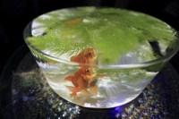 ボトルアクアリウムで飼育できる生体