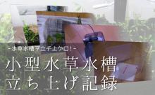 小型水草水槽立ち上げ記録