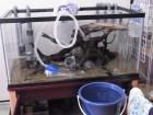 アクアリウム水槽の水換え法:金魚や熱帯魚の換水頻度・量や工夫と道具