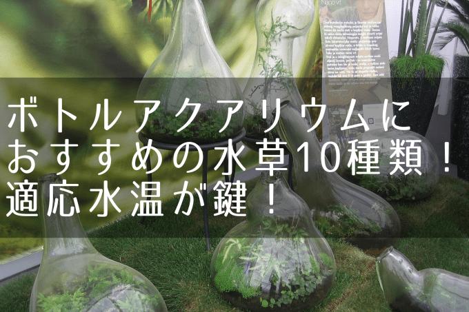 ボトルアクアリウムにおすすめの水草10種類:適応水温が鍵!