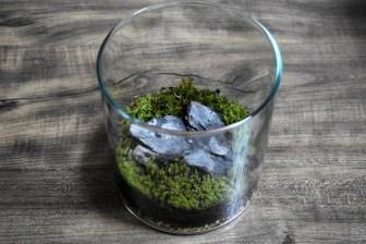 オープン型苔テラリウムの作り方!おすすめのコケの種類と必要なもの