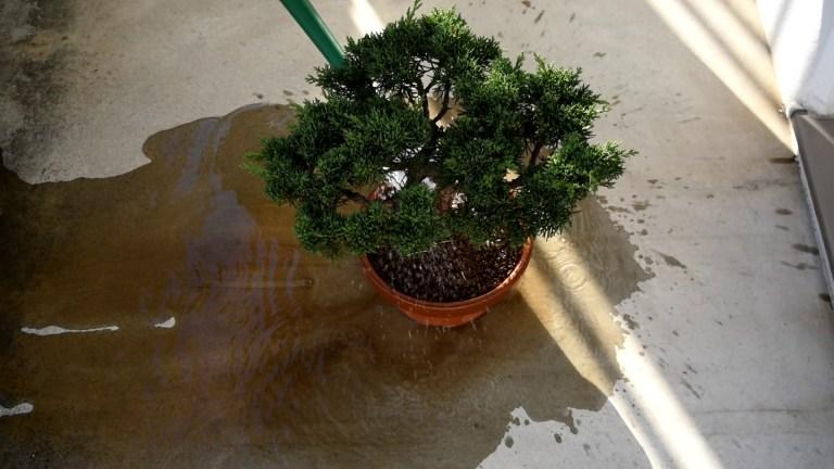 十分に灌水して微塵を取り除く