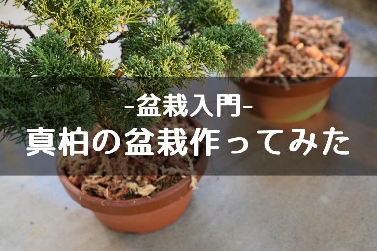 盆栽入門 真柏の盆栽作ってみた