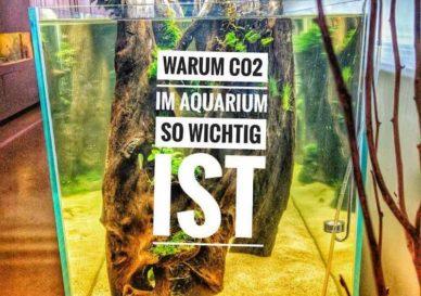 warum-co2-im-aquarium-so-wichtig-ist-800x576