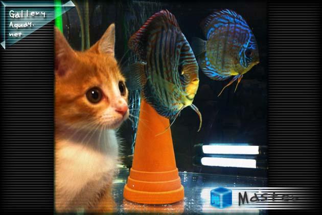 仔猫とディスカス