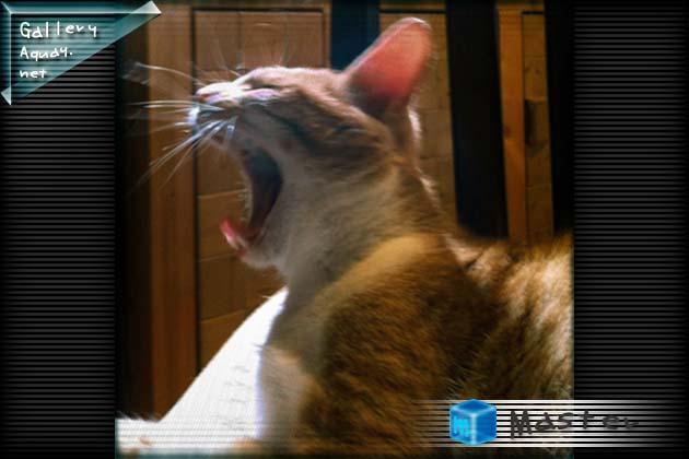 仔猫のあくび