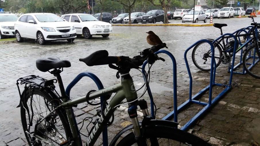 05.Aquela_que_Pedala_O_passaro_e_a_bicicleta_Luciana_Vieira