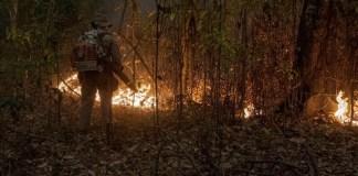 Mato Grosso, Brasil. En 2020, los incendios en el Pantanal, la llanura aluvial interior más grande del mundo, en el centro-oeste de Brasil, alcanzaron más del 12% del bioma. Aproximadamente 2,3 millones de hectáreas fueron consumidas por el incendio, con graves impactos en la vida silvestre de la región.
