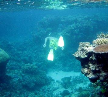 CAIRNS (Great Barrier Reef), Queensland, Australia!